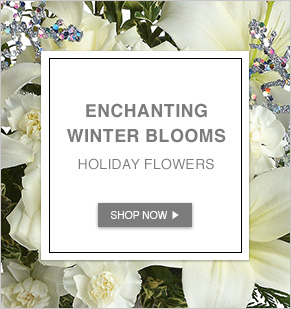 Enchanting Winter Blooms. Holiday Flowers.