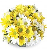Flower Bouquets: Dad's Daisy Bowl