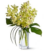 Tropical Flowers: Exotic Orchid Bouquet