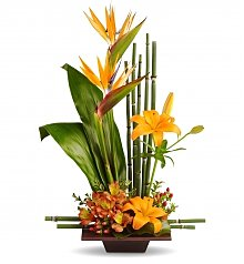 Tropical Flowers: Tropical Birthday Display