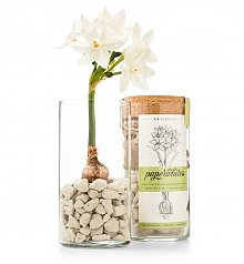 Home Decor: Winter Paperwhites Kit