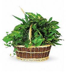 Plants: Large Basket Garden